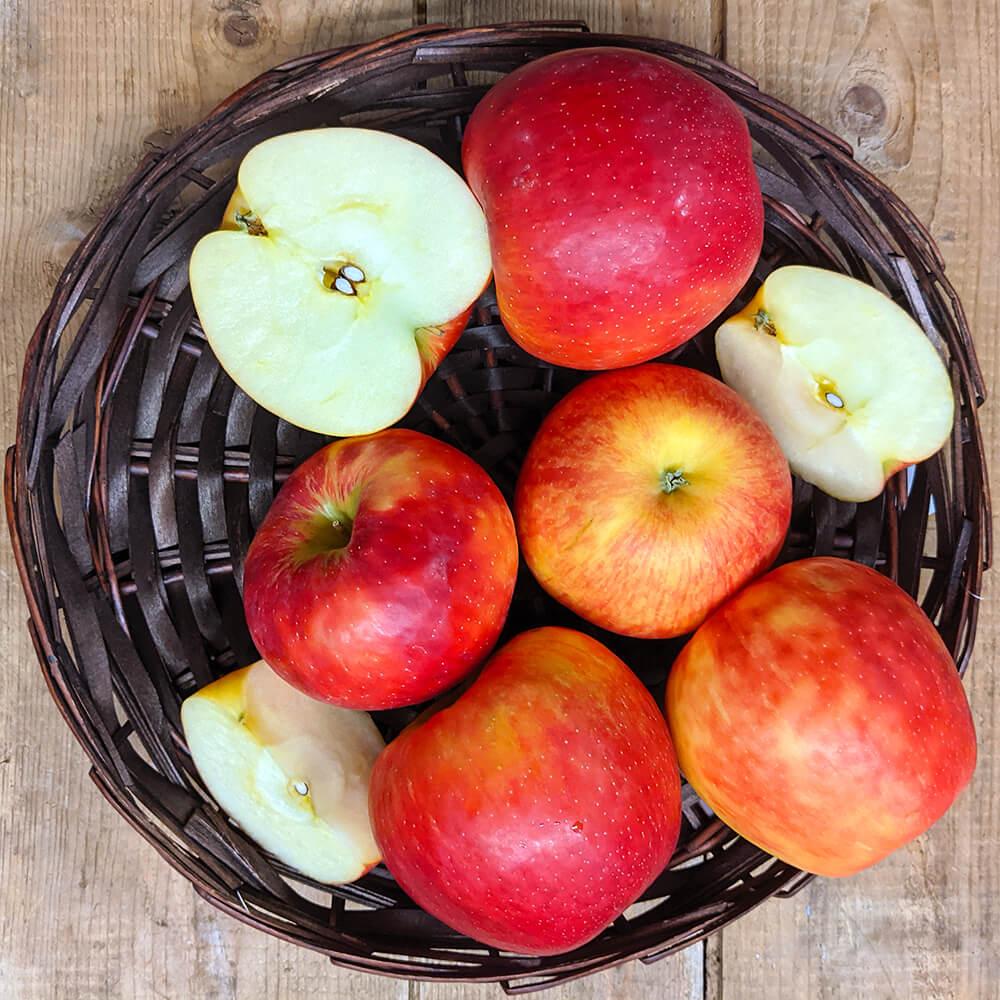 Honey Crisp Apples (1lb)