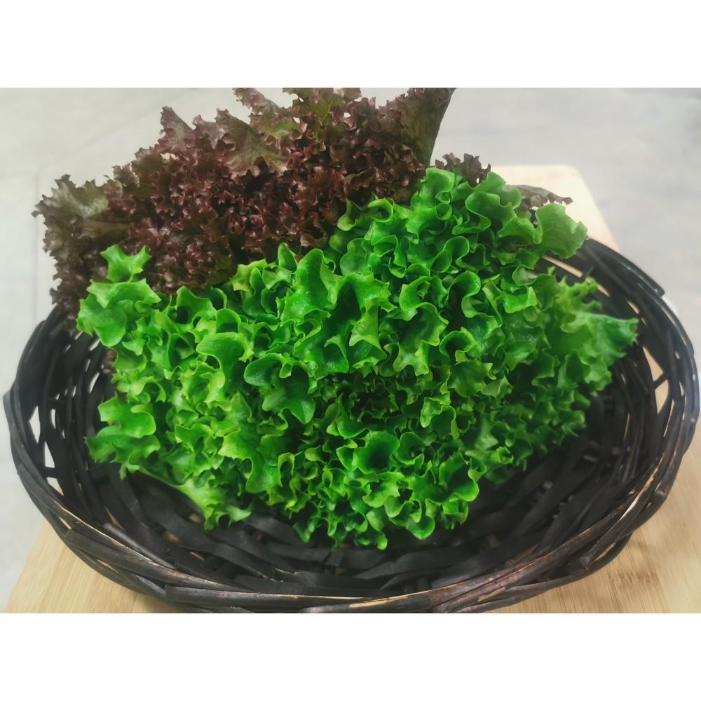 Live Leaf Lettuce